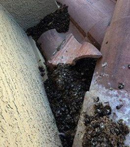 Bird Poop underlayment on tile roof